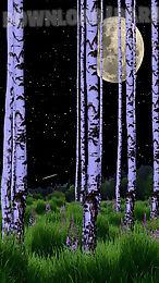 birch wood