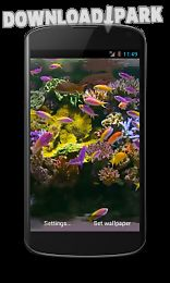 aquarium video live wallpaper