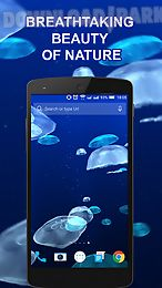jellyfishes 3d live wallpaper