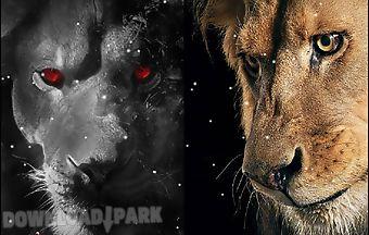 Eyes lion