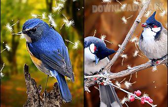 Birds 3d