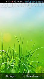 g3 grass