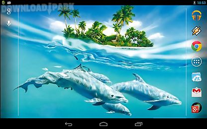 magic touch: dolphins