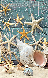 seashells live wallpaper