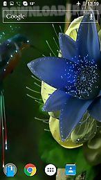 colibri by joseires