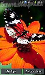 best butterfly