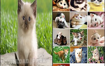 Cat wallpapers cute