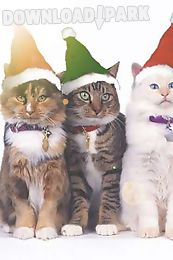 3 Christmas Cats Live Wallpaper Android Live Wallpaper Free Download In Apk