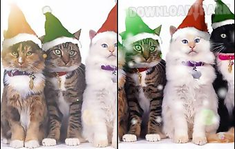 3 christmas cats live wallpaper