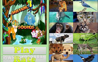 Animal sounds game for kids