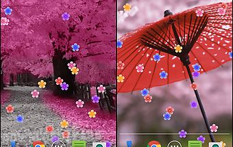 Blossom live wallpaper