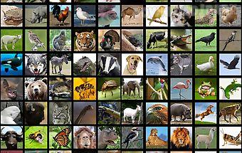 Animals sound box pro