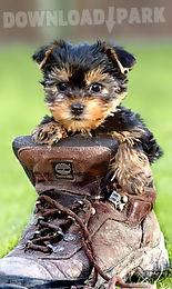 cute dog, puppy