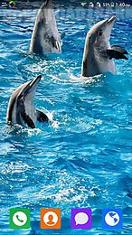 lovely dolphin