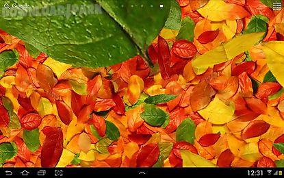 autumn leaves 3d