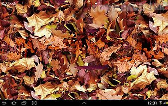 Autumn leaves 3d