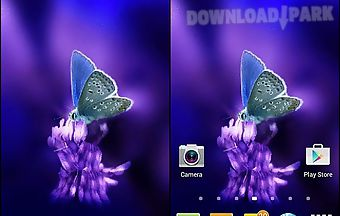 Cute butterfly by daksh apps