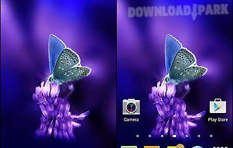Cute butterfly by daksh apps