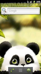 panda chub live wallpaper free