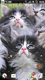 kitten live wallpaper