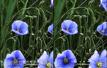 Blue flowers by jacal video live..