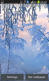 snow white in winter