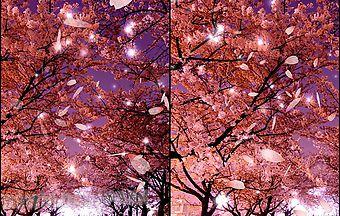Sakura 3d