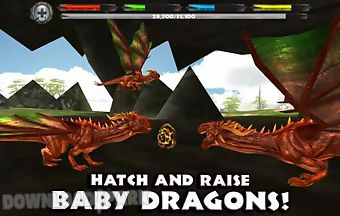 World of dragons simulator rare