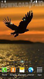 birds by blackbird wallpapers