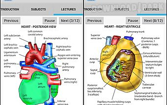 Anatomy heart lecture