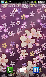 cherry blossomwallpaper free