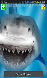 angry shark: cracked screen