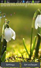 lily of valley forest