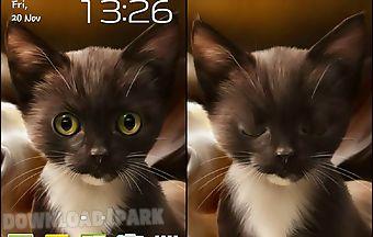 Surprised kitty