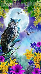 birds live wallpaper