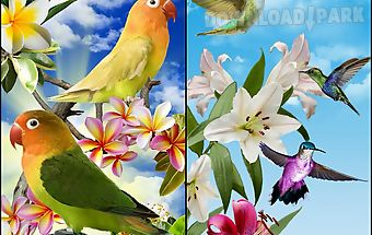 Birds live wallpaper