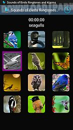 sounds of birds ringtones
