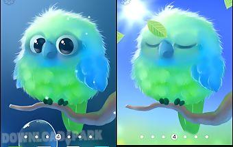 Kiwi the parrot