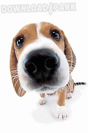 cute dog sniffs live wallpaper