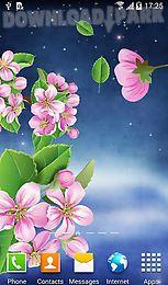 night sakura