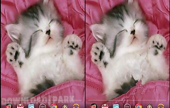 Sleeping kitty 3d wallpaper