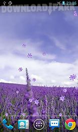 lavender live wallpaper