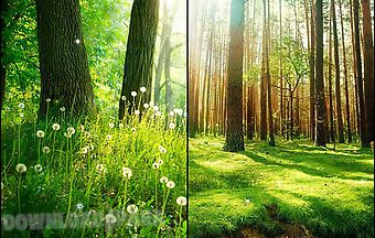 Forest by live wallpaper hq