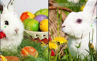 Easter bunnies 2015