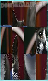 puzzle slide photo cat