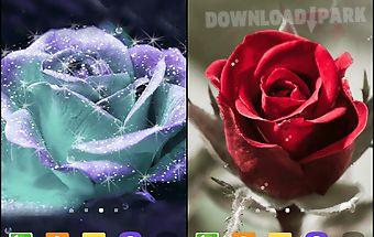 3d rose live wallpaper