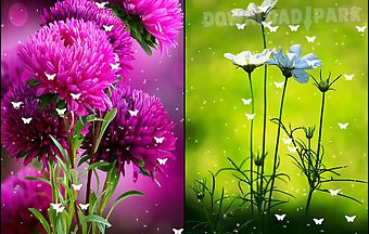 Flowers by stechsolutions