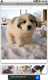 adorable pet farm free