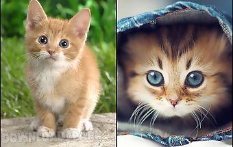 Cat kittens live wallpaper