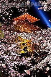japanesesakura lwallpaper free